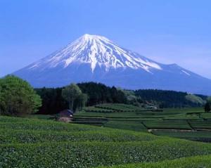 Mount Fuji Seen from Green Tea Field in April